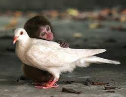 monkey with bird