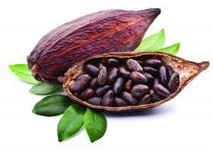 ce_0214_cocoabeanpod