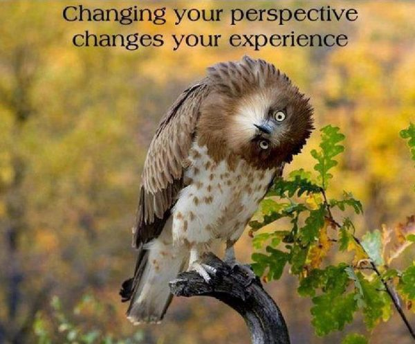 810276939-Quote_Changing_your_perspective